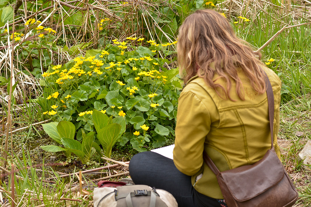 Malgosia sketching skunk cabbage on location in Wilket Creek..