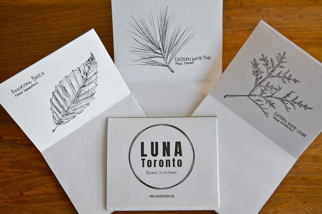 Victoria created the LUNA Toronto logo and the artwork inside of the mini sketchbooks that we hand out during sketching tours.