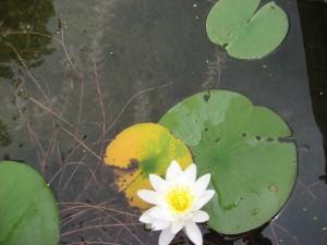 Lake-Beulah-Lily-Pads-001.jpg
