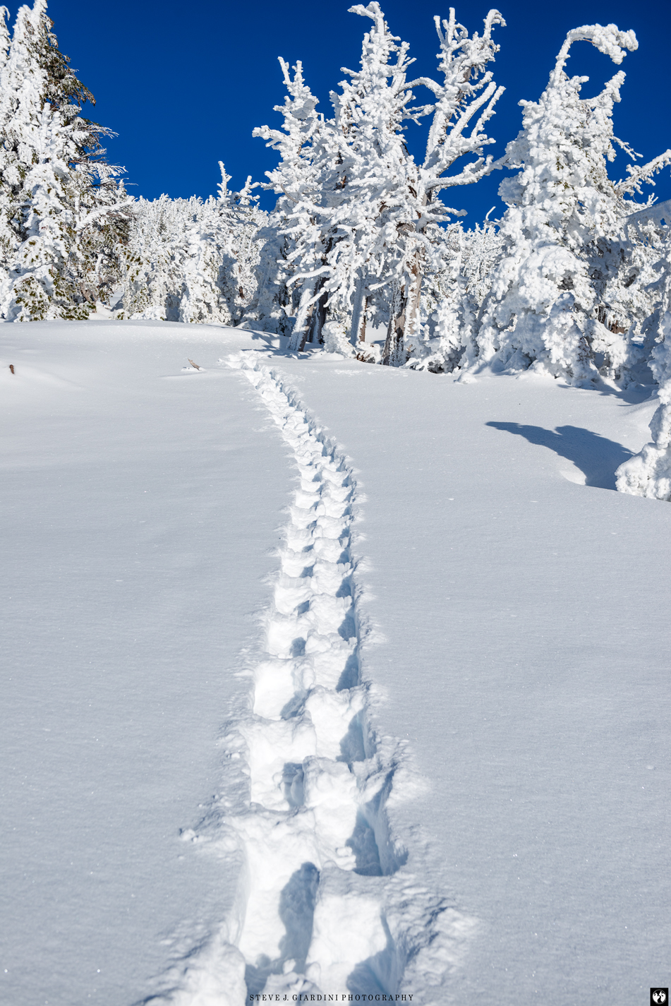 Snowshoe Tracks 1810301NWND8