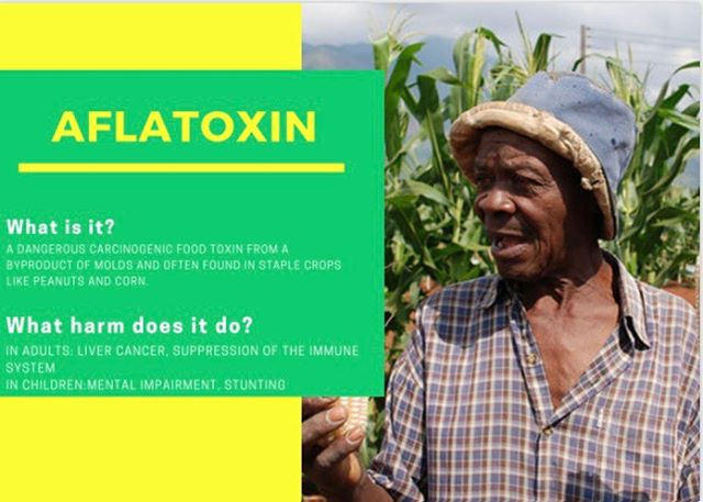 We are 11 days away from The Full Belly Project's fundraiser!!! It will be on October 18 at Morning Glory coffee house starting at 9:00am! Don't forget to tell them you want to donate to FBP! Today's post covers some facts on Aflatoxin and some of the effects it has. Are you ready to make a change? #changetheworldwithFBP #nomorealfatoxin #fundraiser #wilmycaresabouttheworld