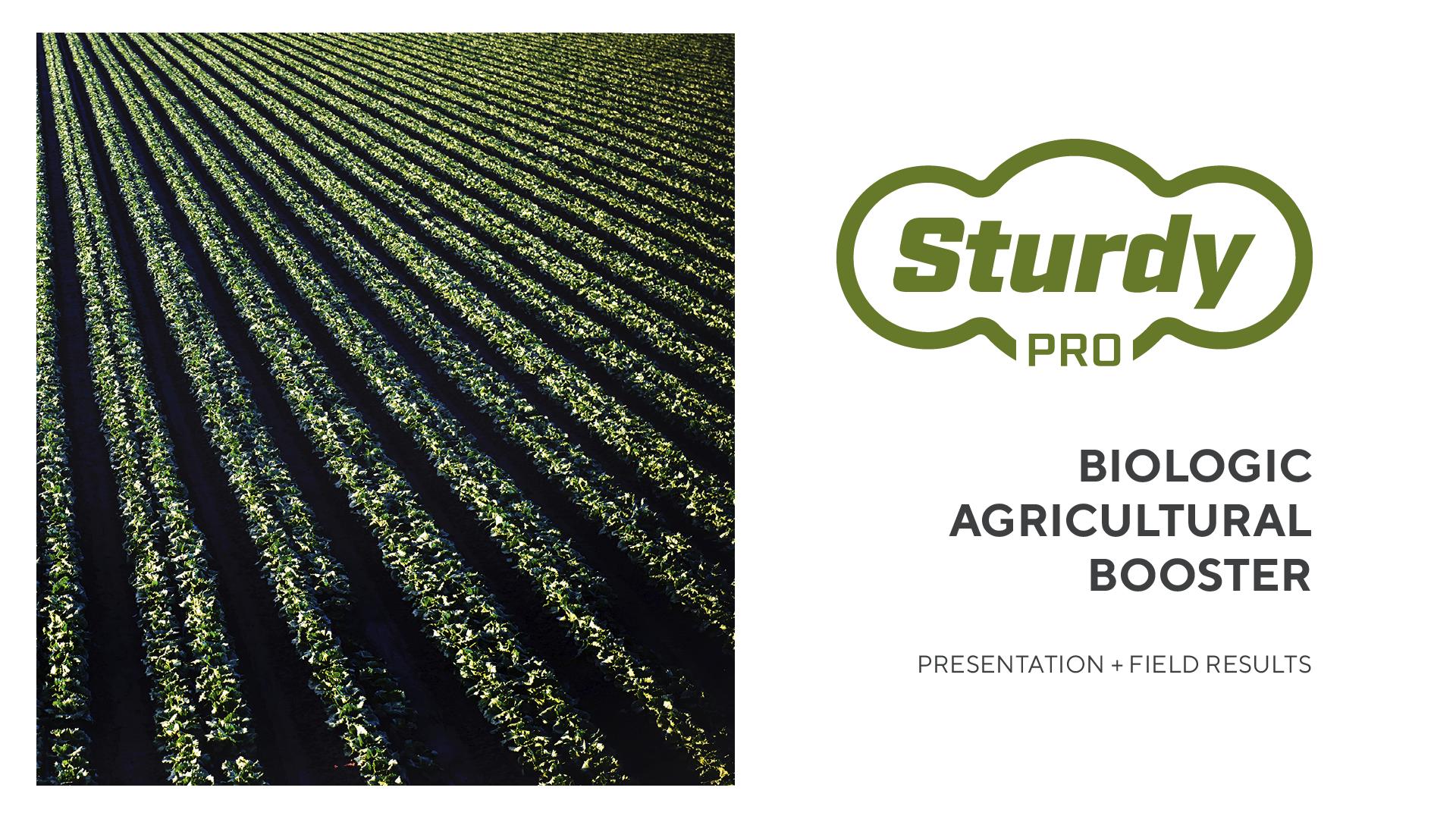 STURDY_Presentation-01.png