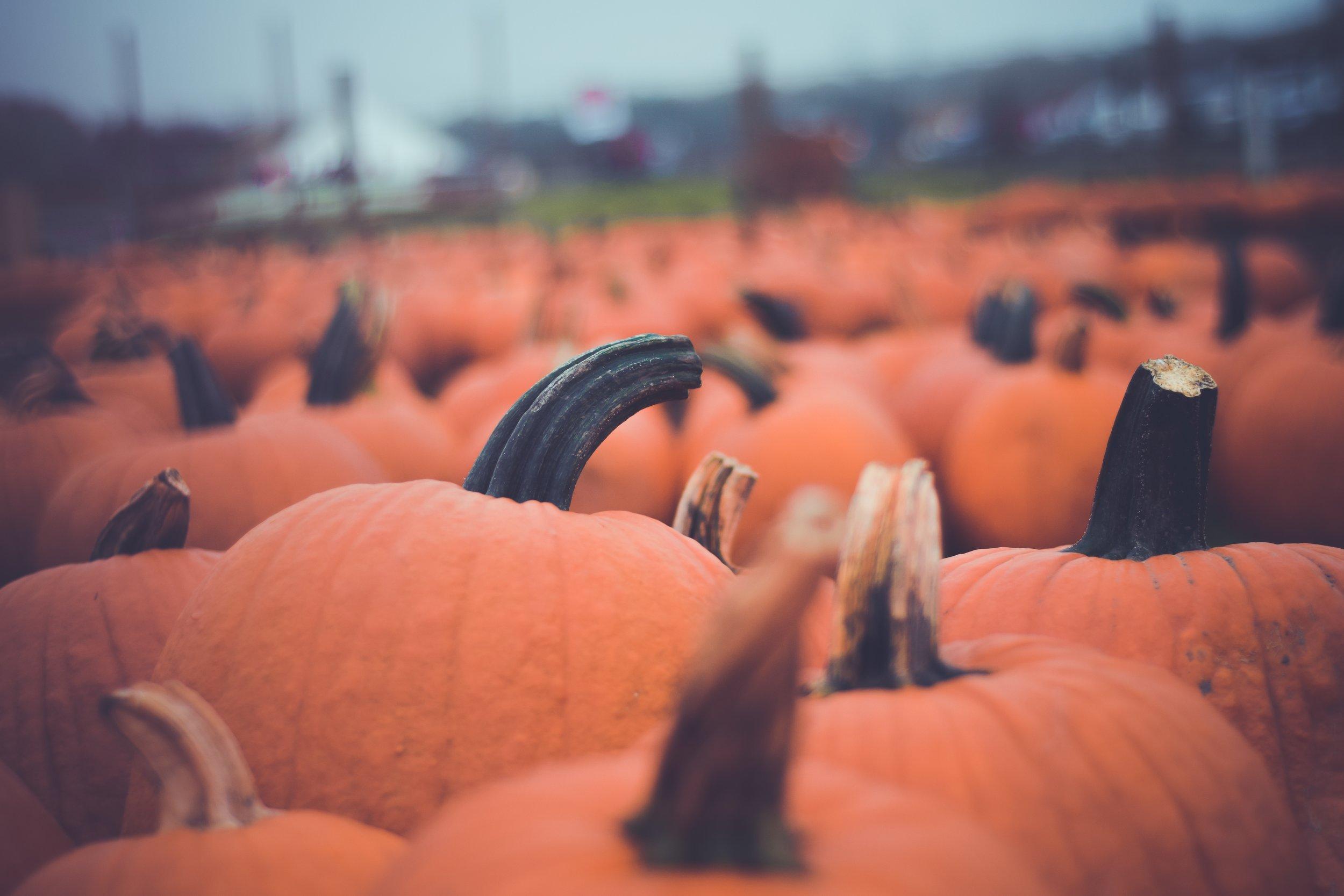 pumpkins, fall, halloween