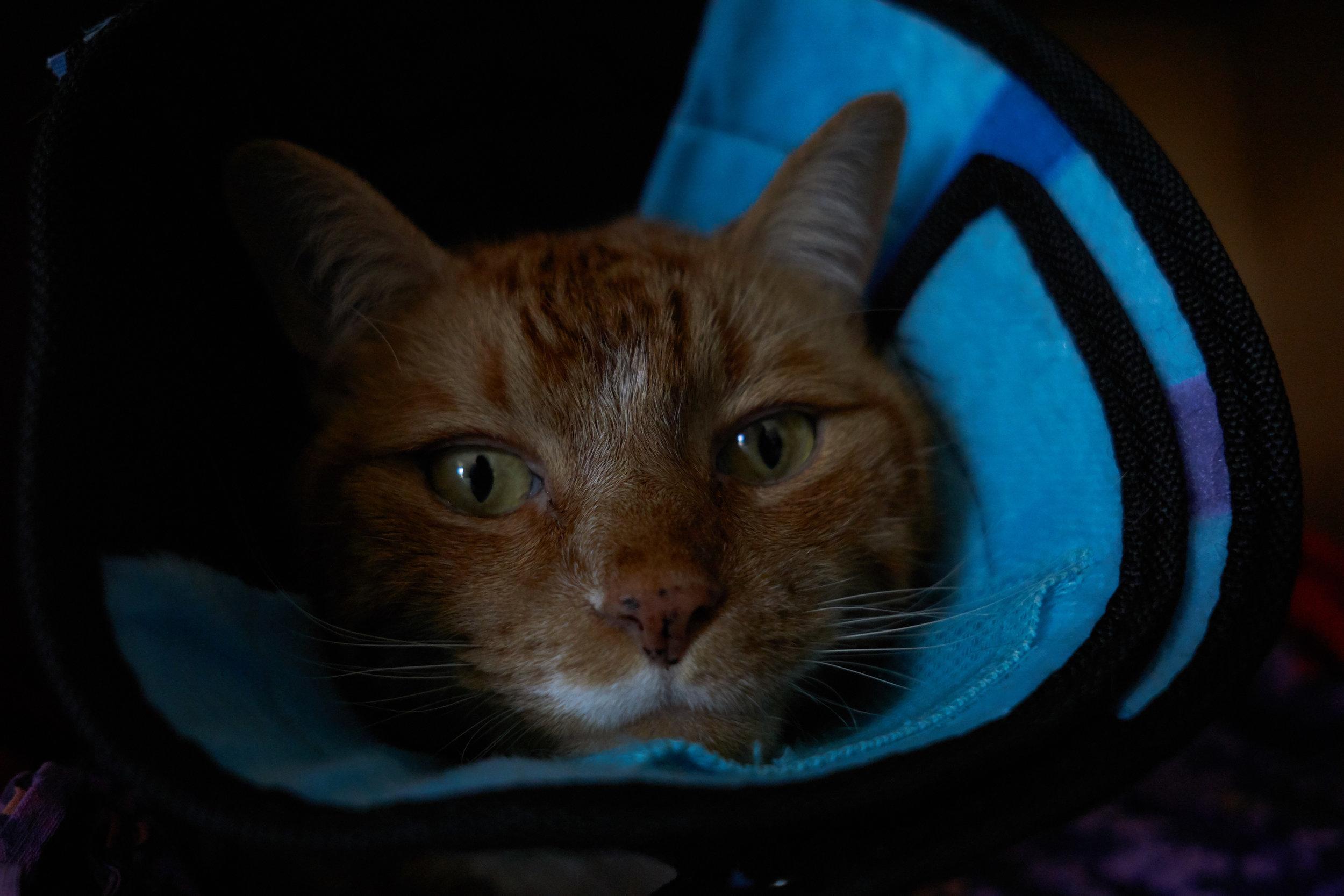 cat_in_a_cone.jpg