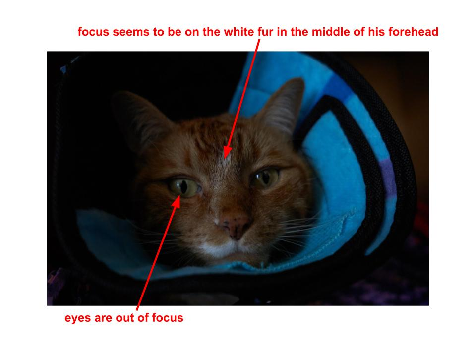 Cat Photo Annotated.jpg