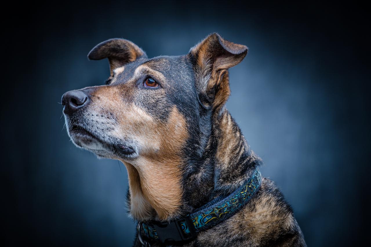 doggy-67.jpg