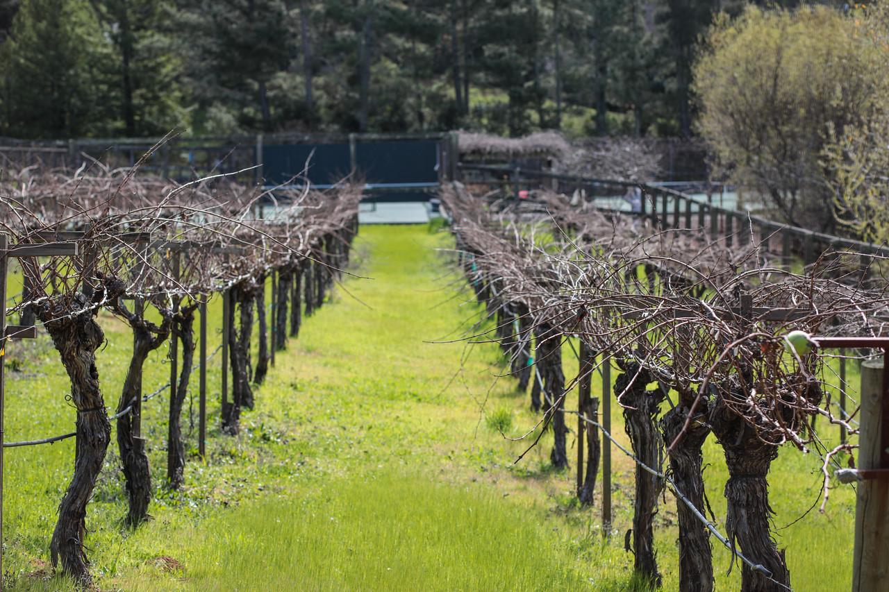 Portola Valley Ranch Blu Skye Media-8747-X2.jpg