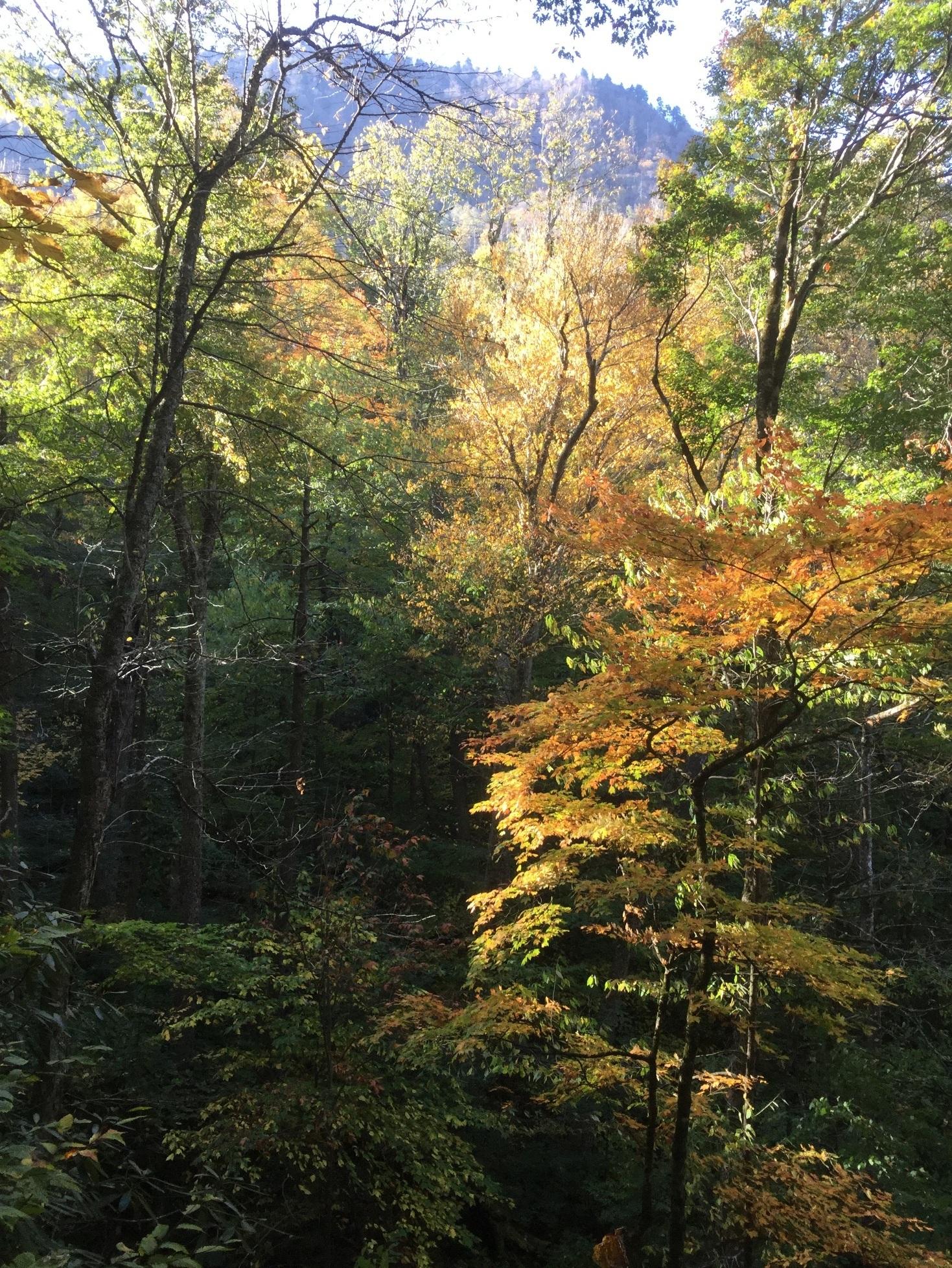 Mount LeConte Great Smoky Mountains 03.JPG