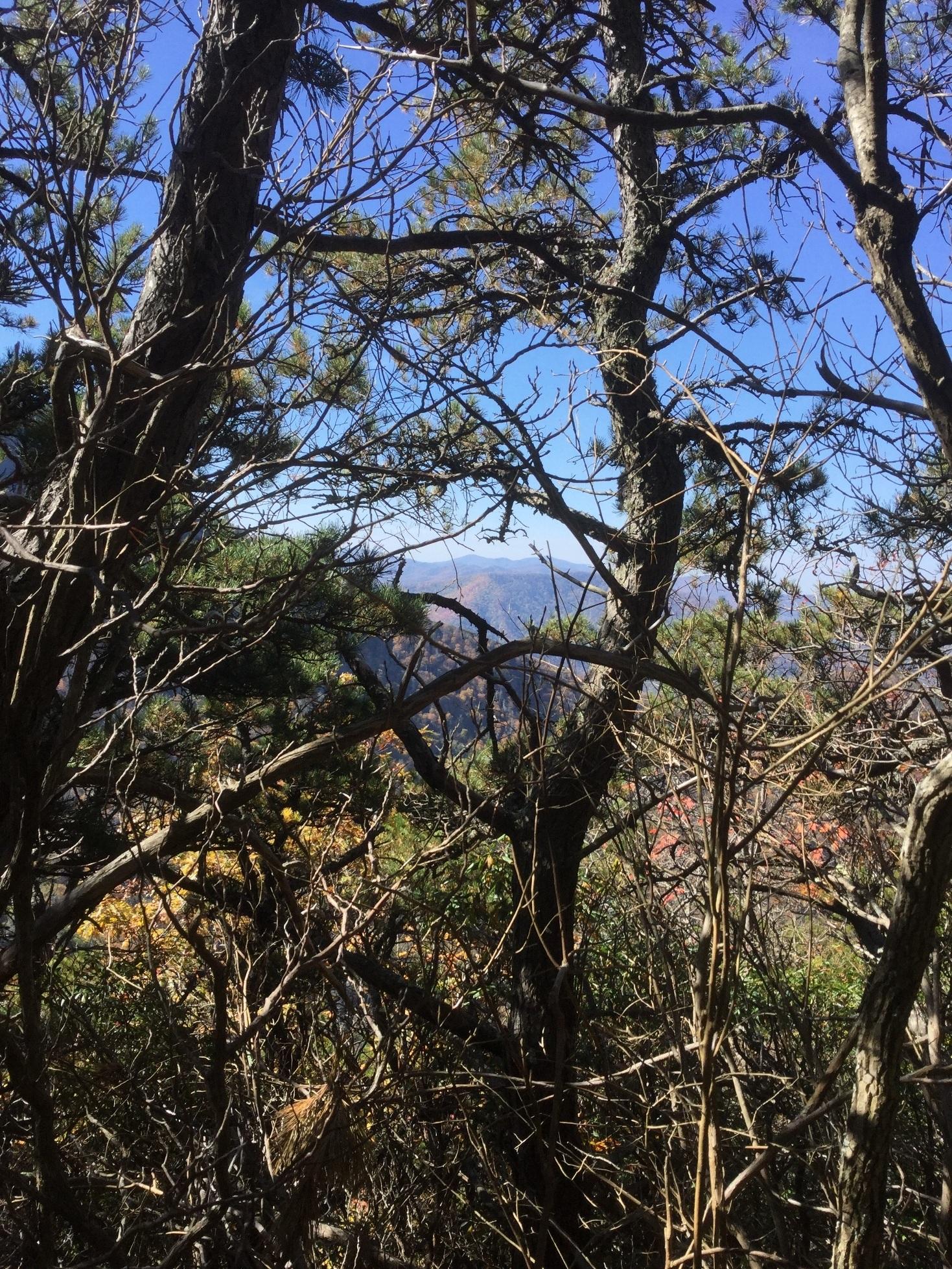 Mount LeConte Great Smoky Mountains 20.JPG