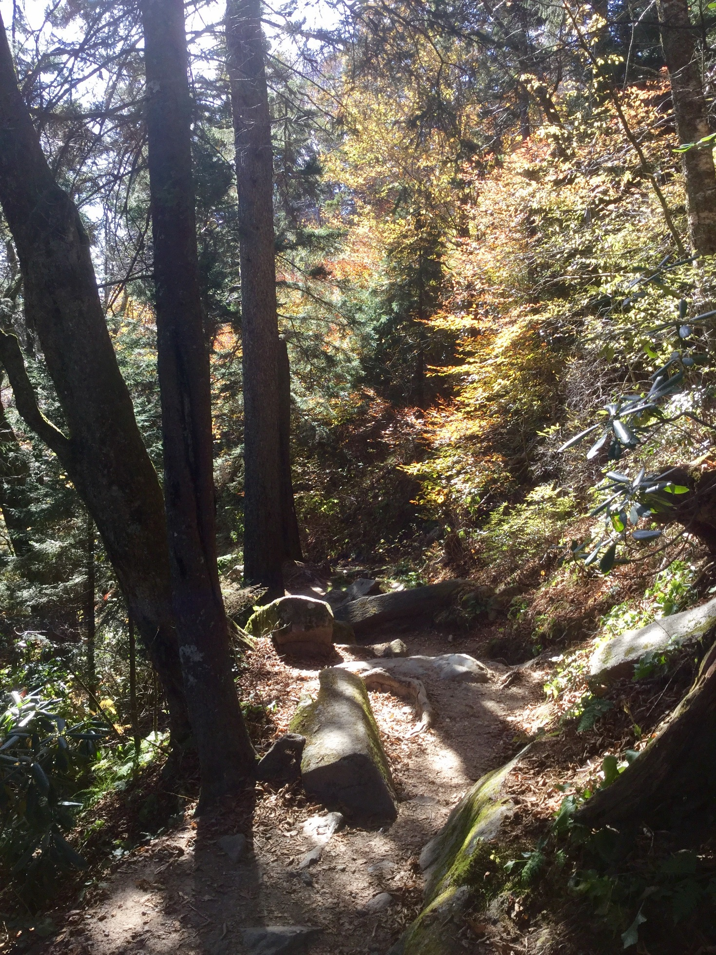 Mount LeConte Great Smoky Mountains 40.JPG