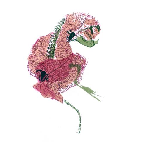joanna-kidd-flower-creature-1-1.jpg