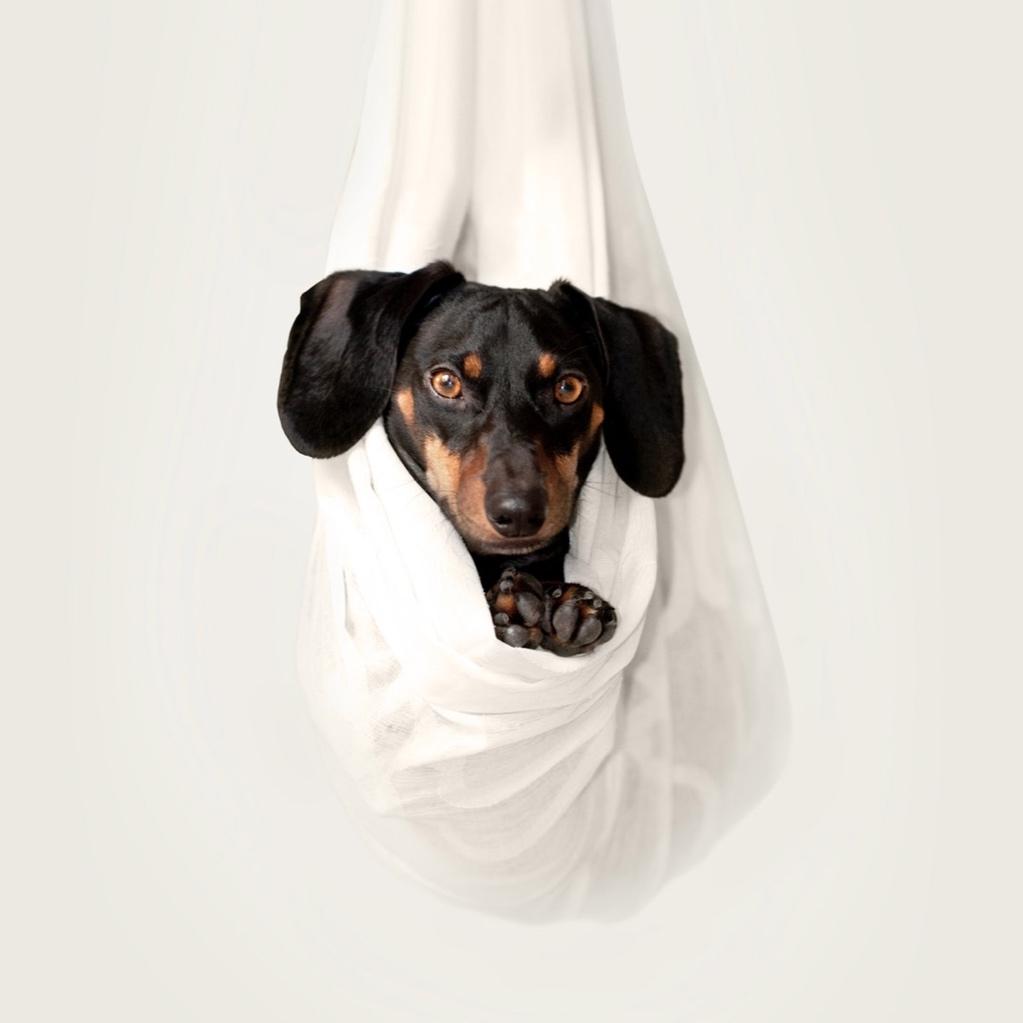 dog+hanging