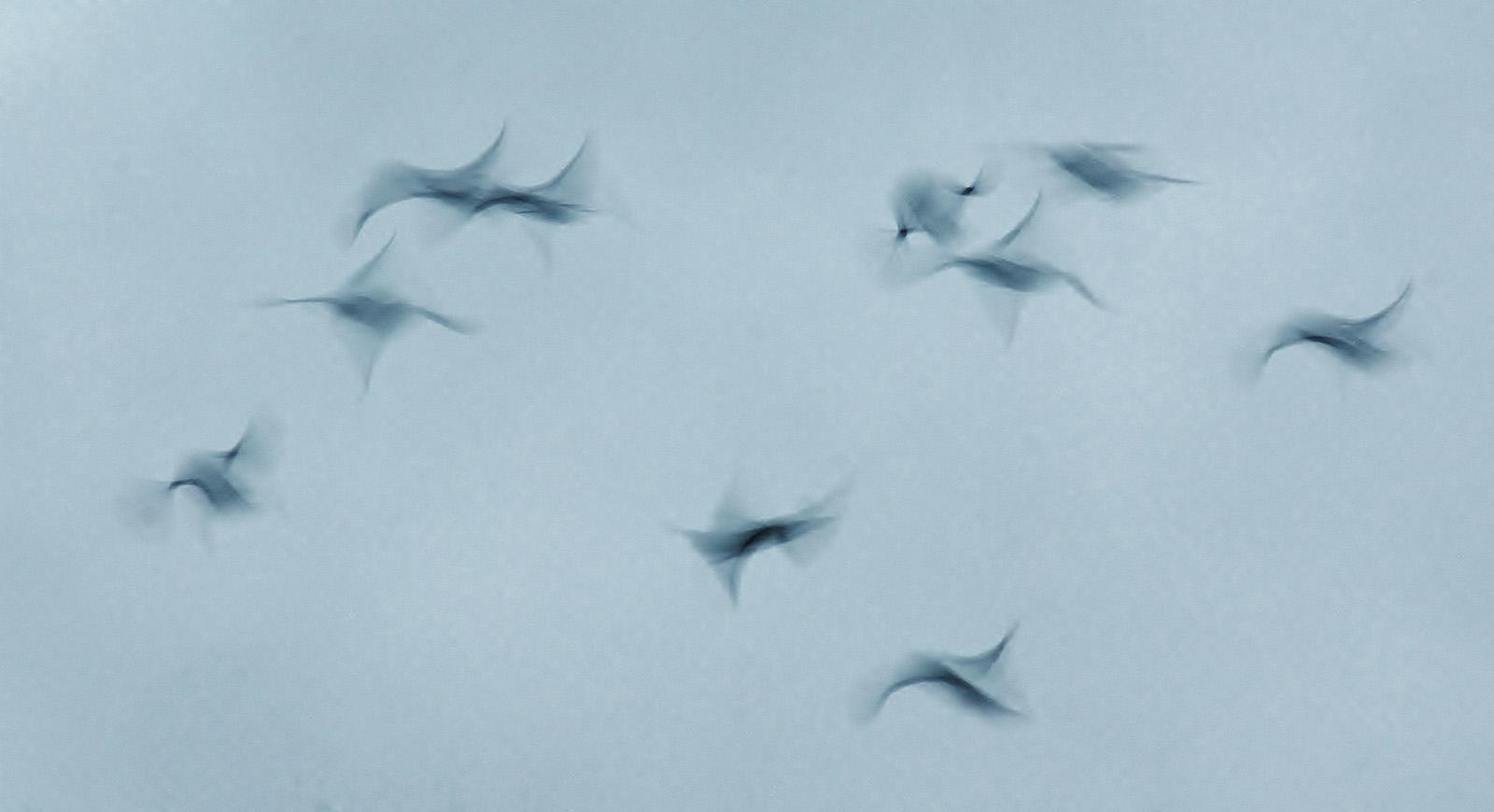 Starlings.JPG.jpg