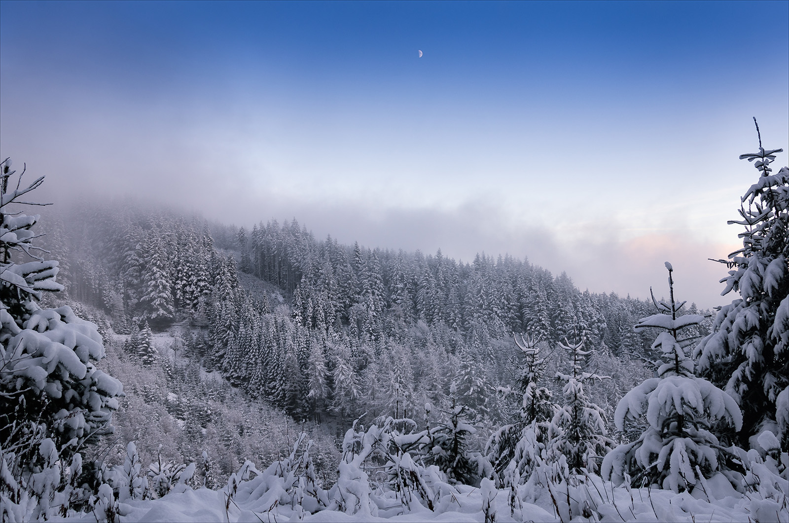 Glentress Snowfall   BPCC 52.jpg
