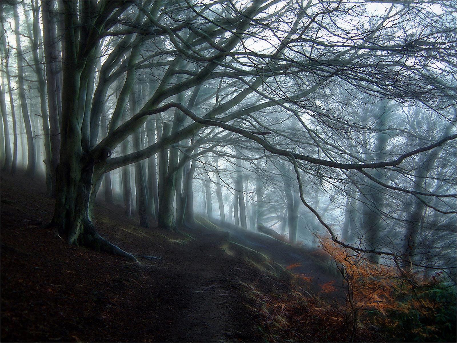 Trees_1600.jpg