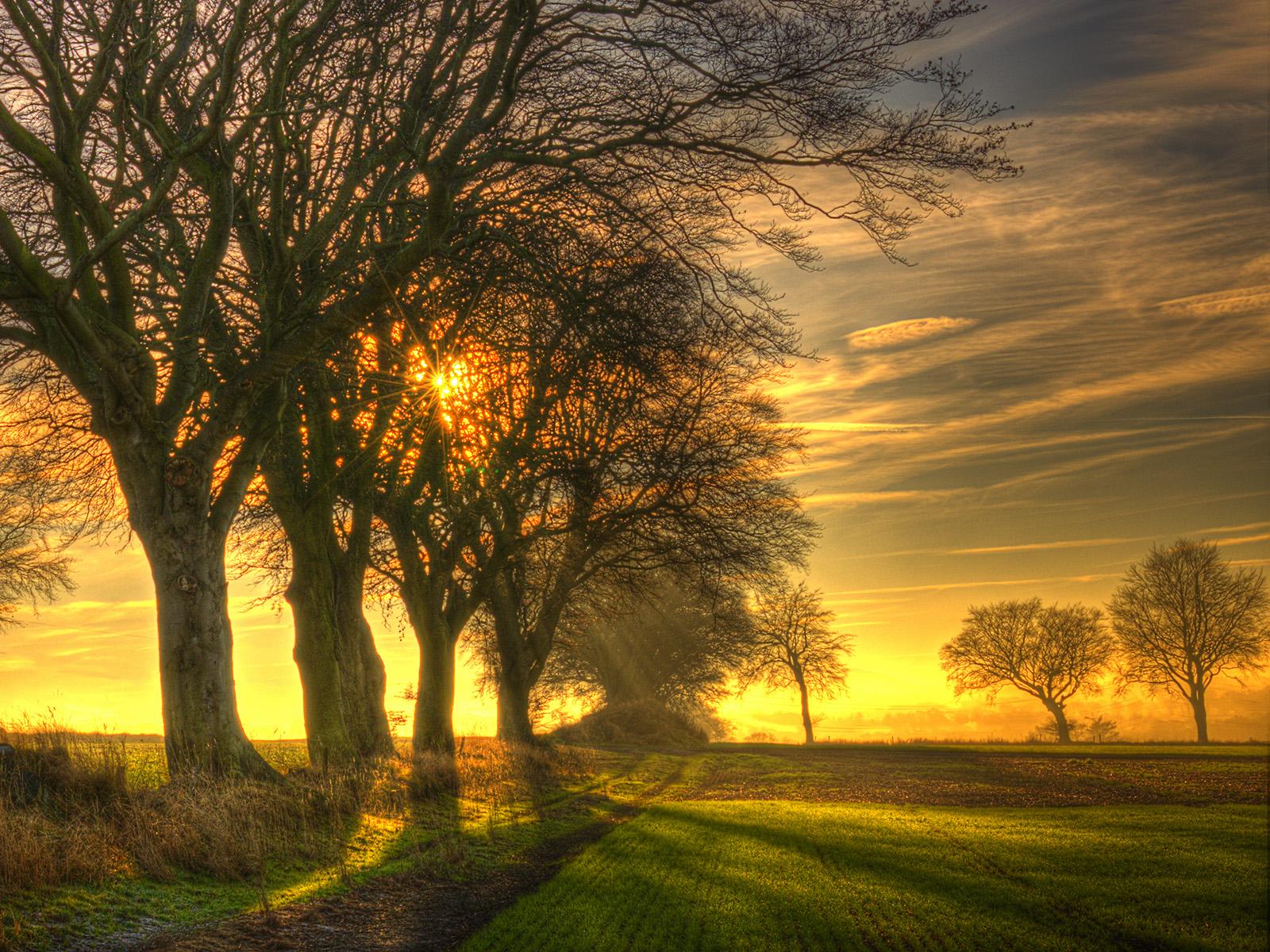 Winter Sunshine.jpg
