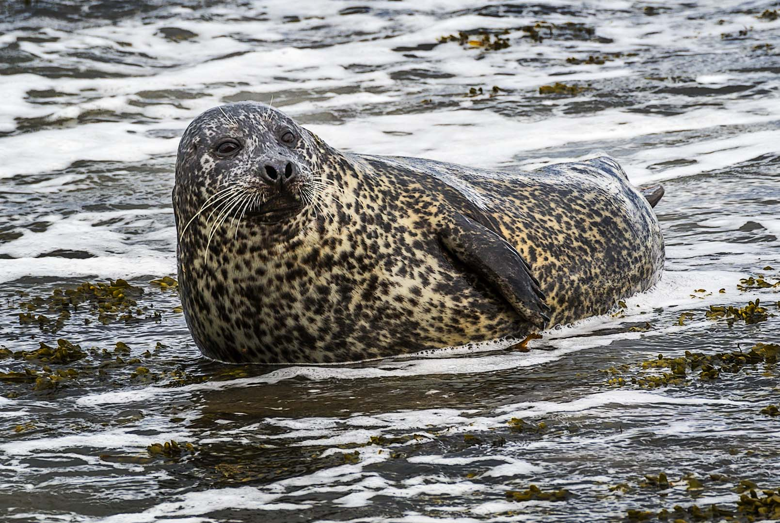 20170423_0435-Common Seal.jpg