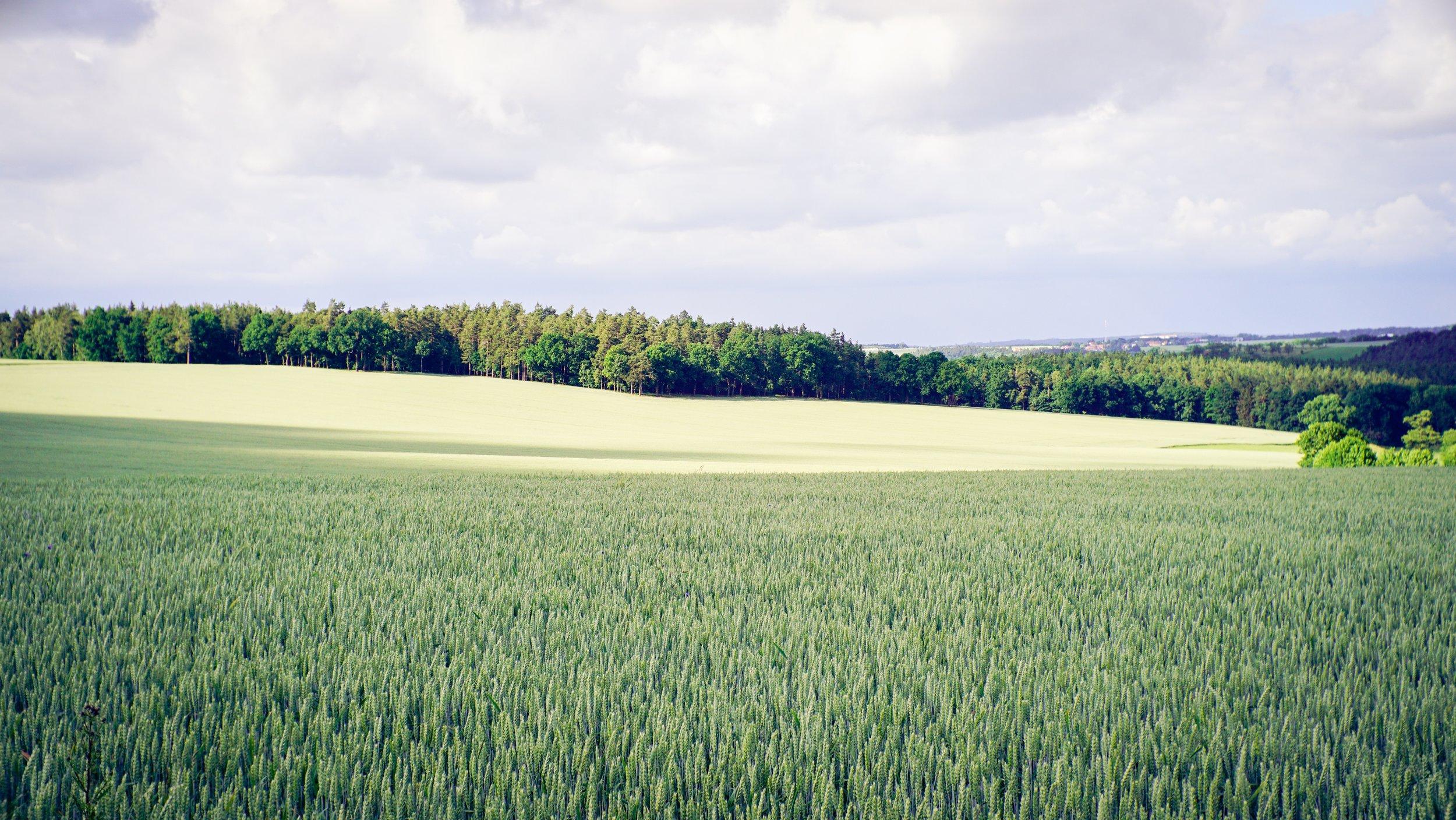 hilthart-pedersen-93952-unsplash.jpg