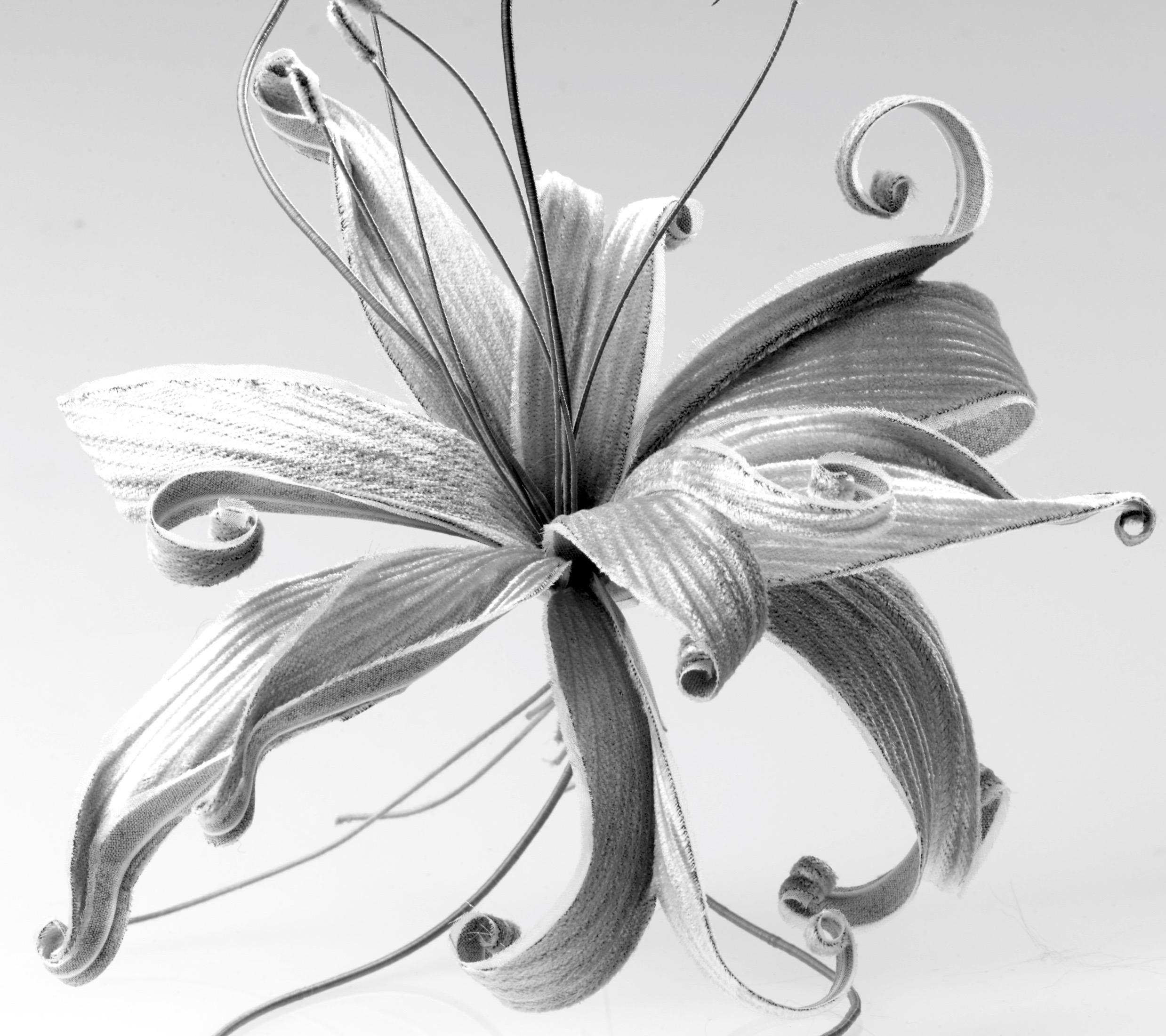 Lily copy.jpg