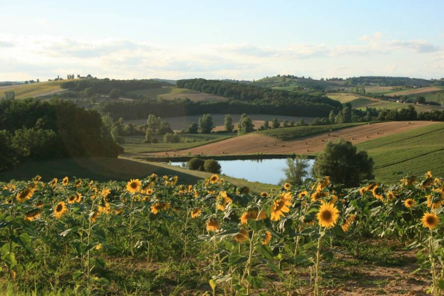 View from estate over sunflower fields and lake.jpg