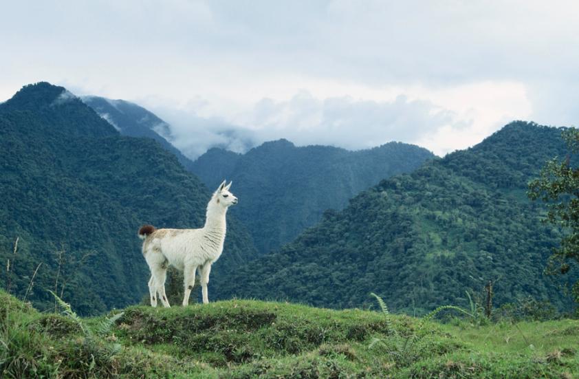 Ecuador, ¿el secreto mejor guardado de Latinoamérica?