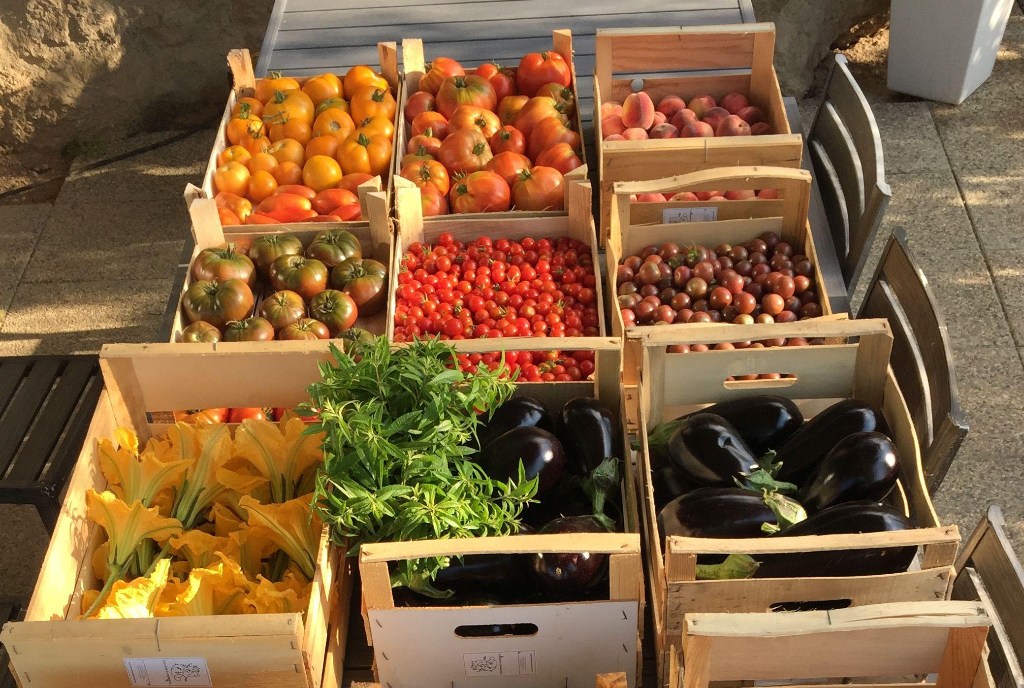 Les tomates du Jardin du BioChef