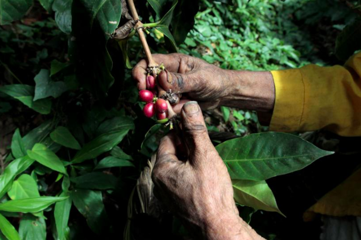 Your Coffee Addiction is Killing Central America's Economy