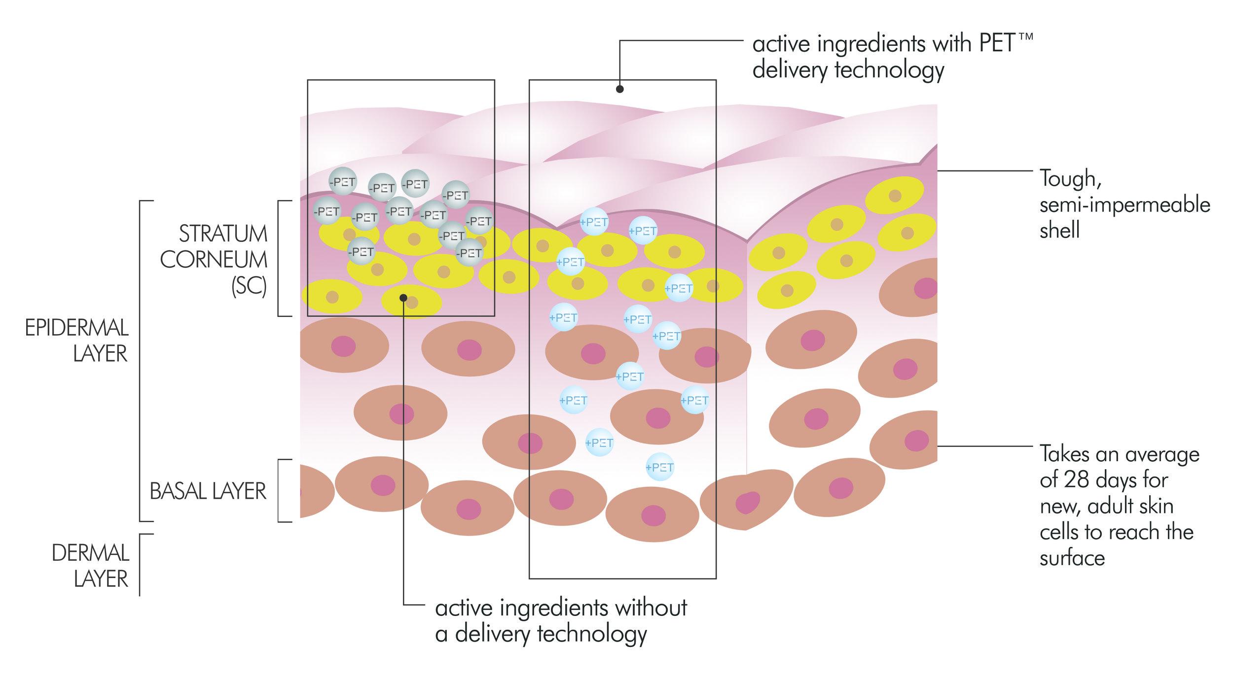 pet_diagram.jpg