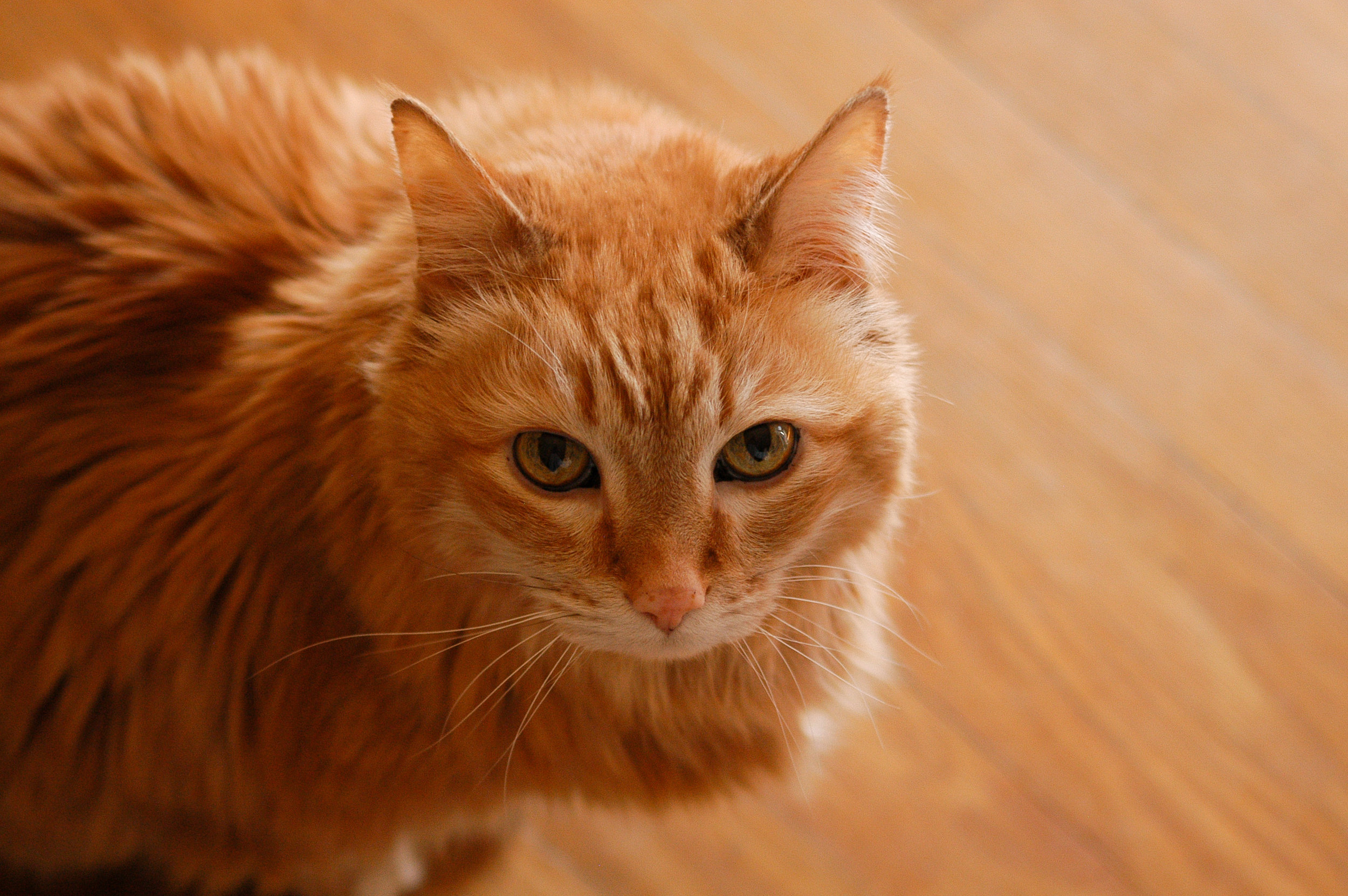 cats are like kids - Over half of American households with cats view their cats as members of their family. Just like kids, cats need our protection, and will thrive in an enriching home environment.