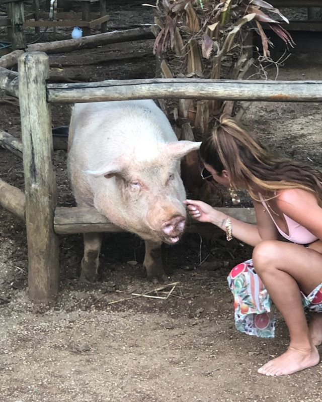 Must make friends with any 4 legged cuties I see 🐷 . . . . . . . . #lola #costarica #lola's #cutie #vacation #vacationmode #plantbased #loveanimals #paradise