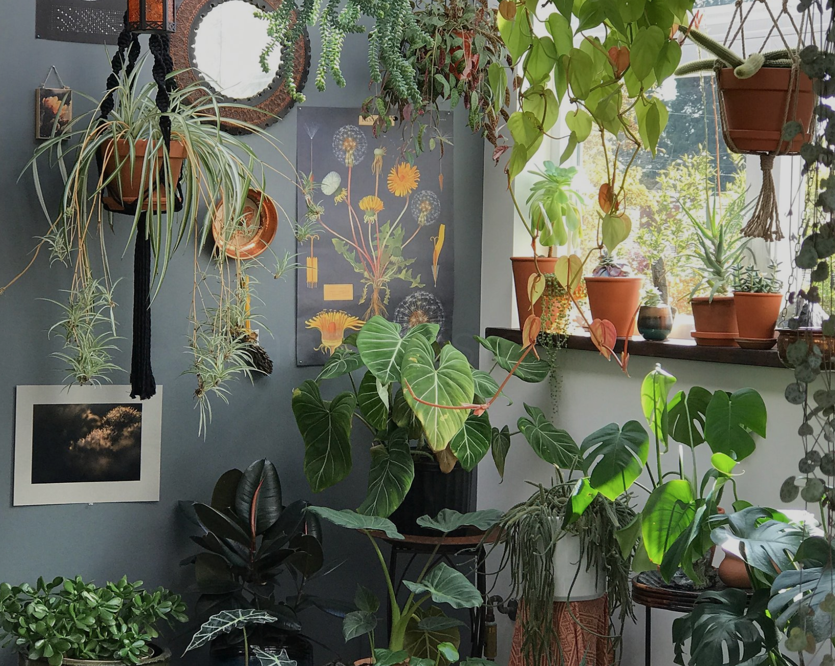 SACRED SPACE DESIGN - INDOOR & OUTDOOR PLANT CONSULTING