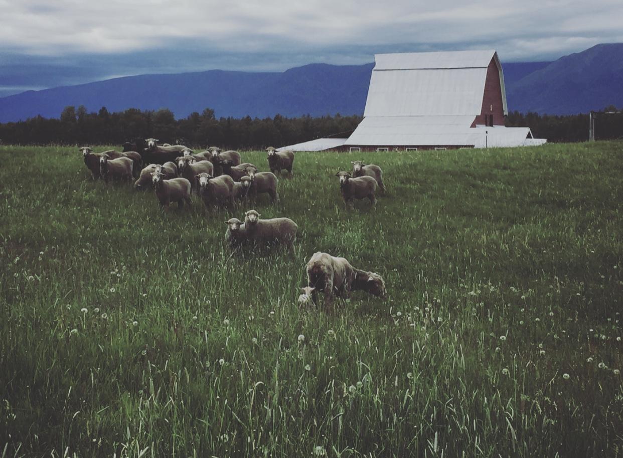 Yule Farm