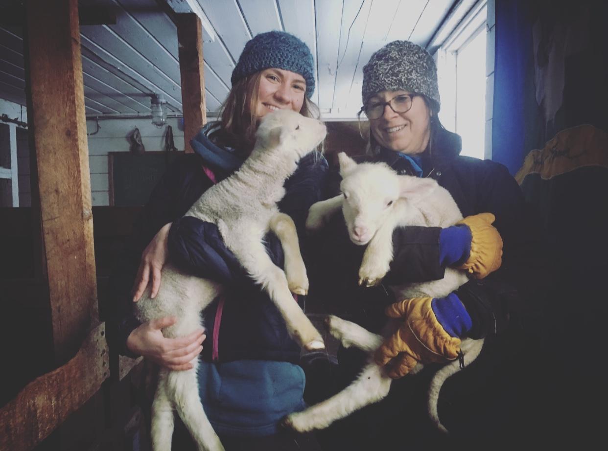 Happy Alaskan Sheep