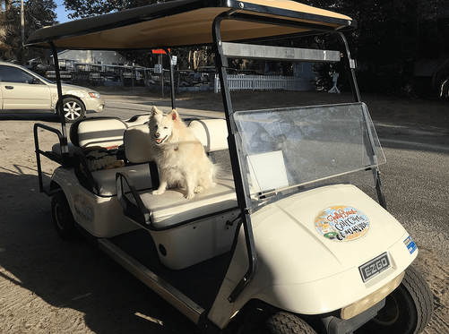 Folly-Golf-Cart-Rentals