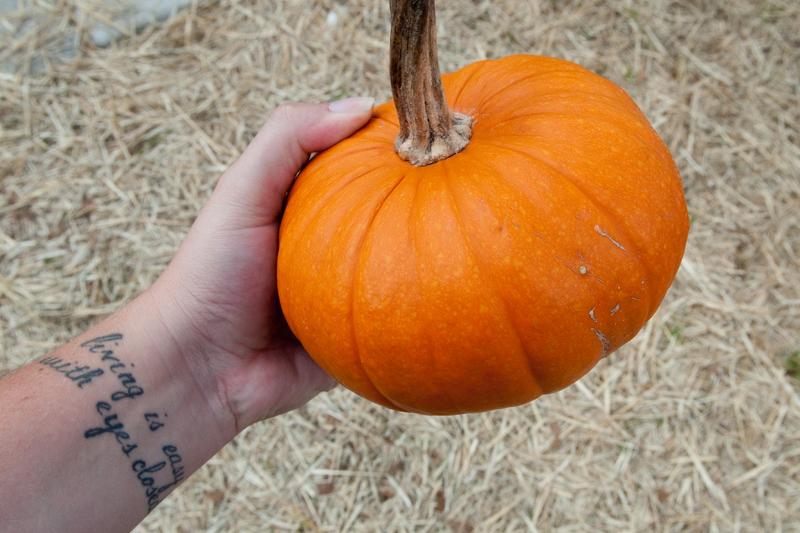 pumpkins_016.jpg