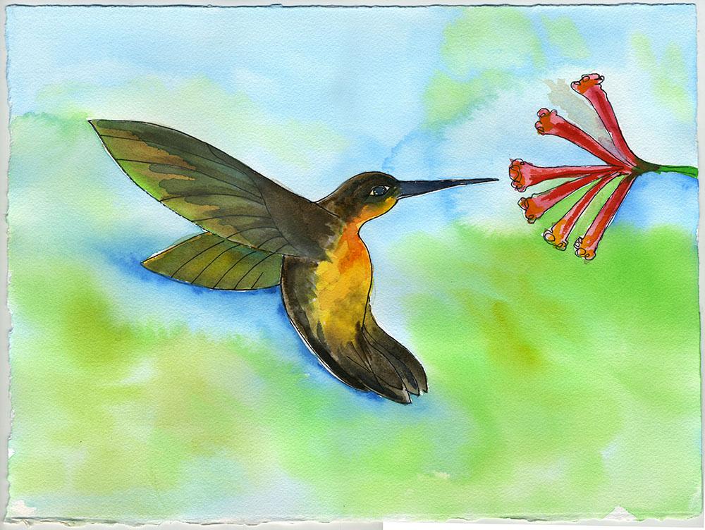 hummingbird-6.jpg