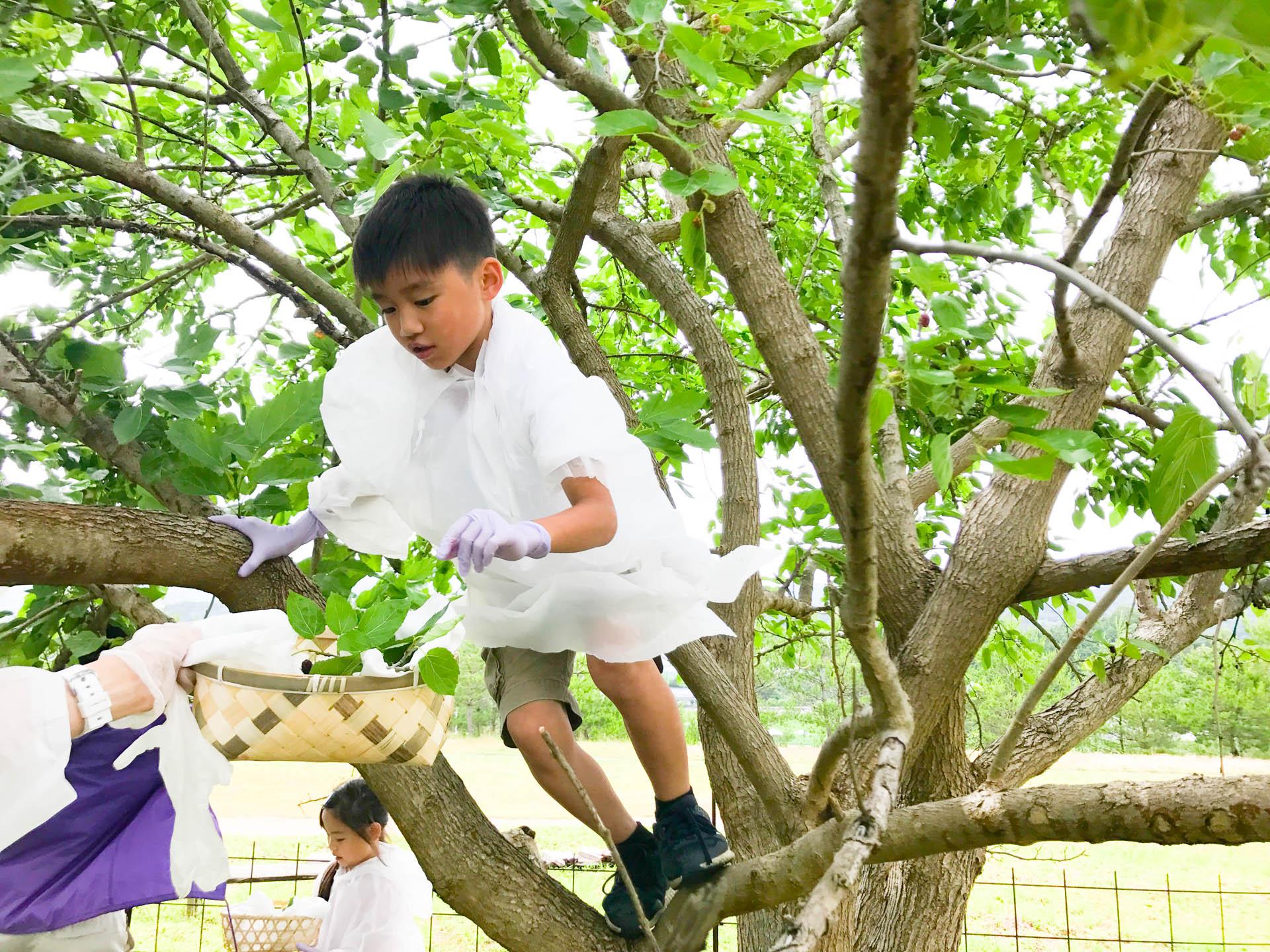 桑の木に登る弟