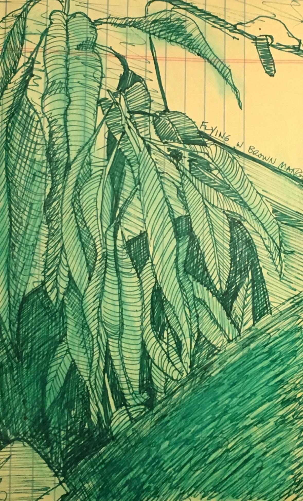 1 mango tree.jpg