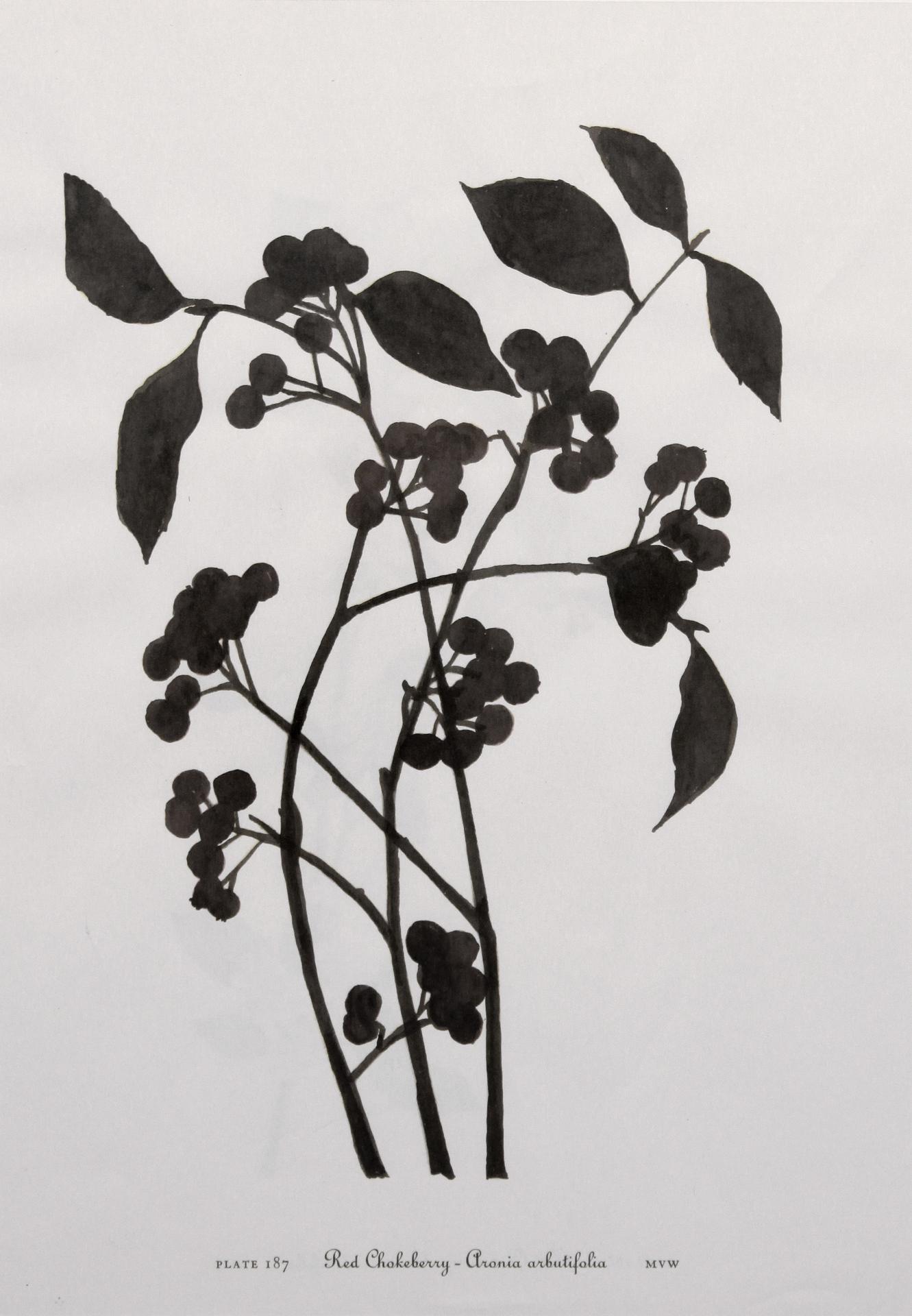 Carbon (detail)