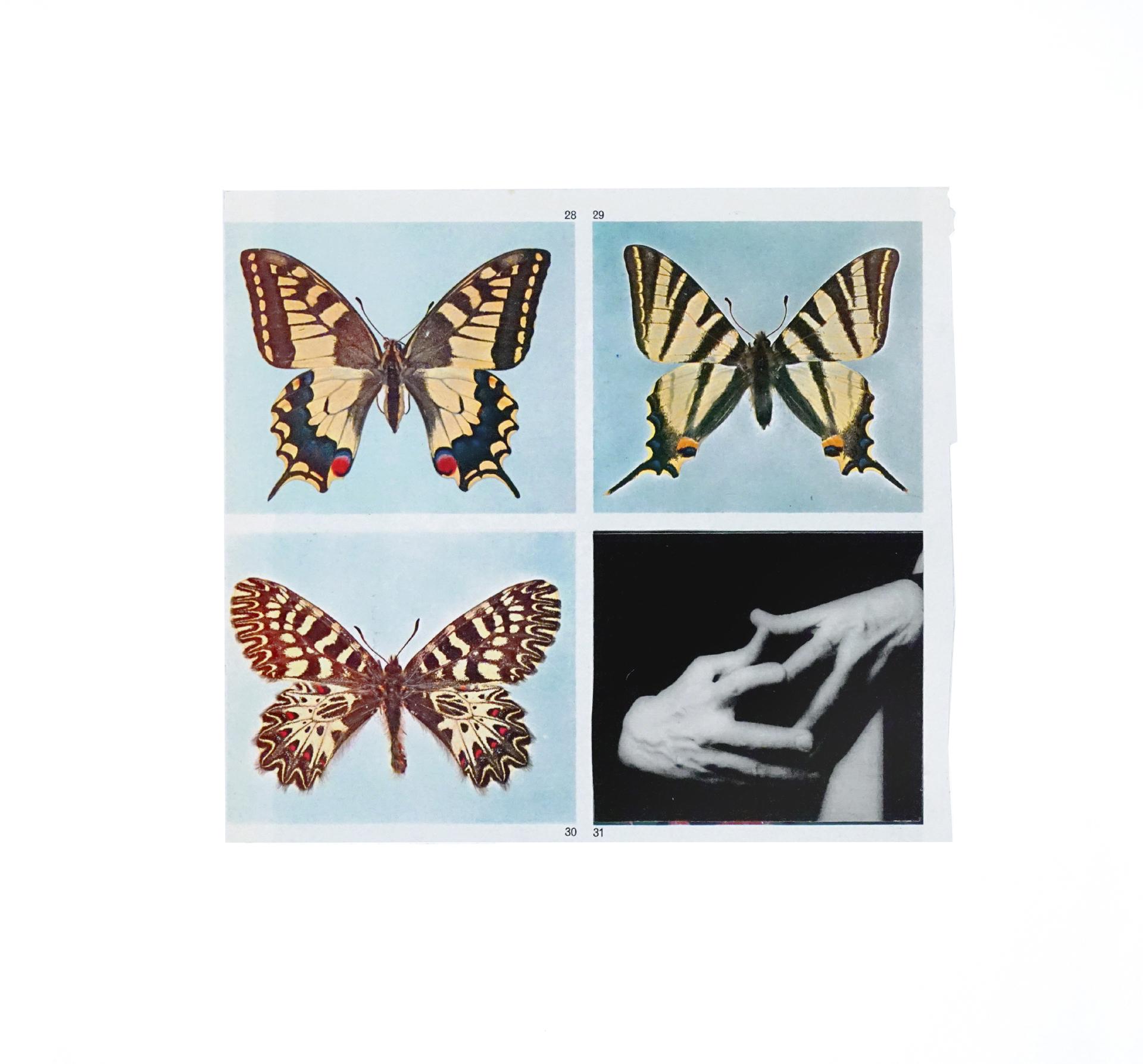 Butterfly Effect - 8, 2017