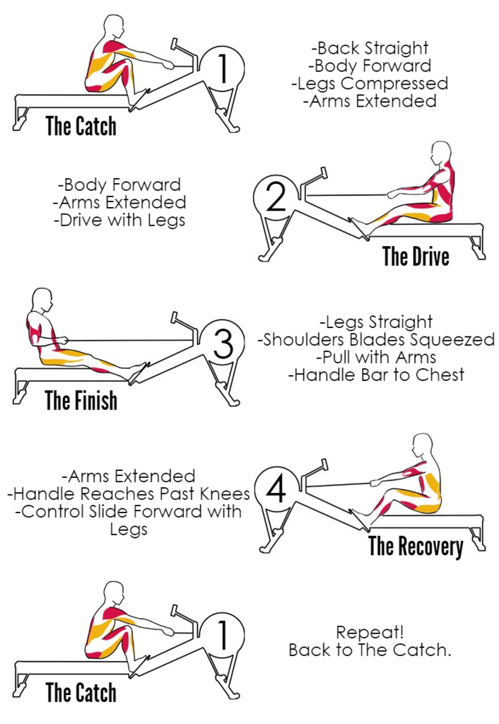 How_To_Improve_Rowing_Technique_1024x1024.png