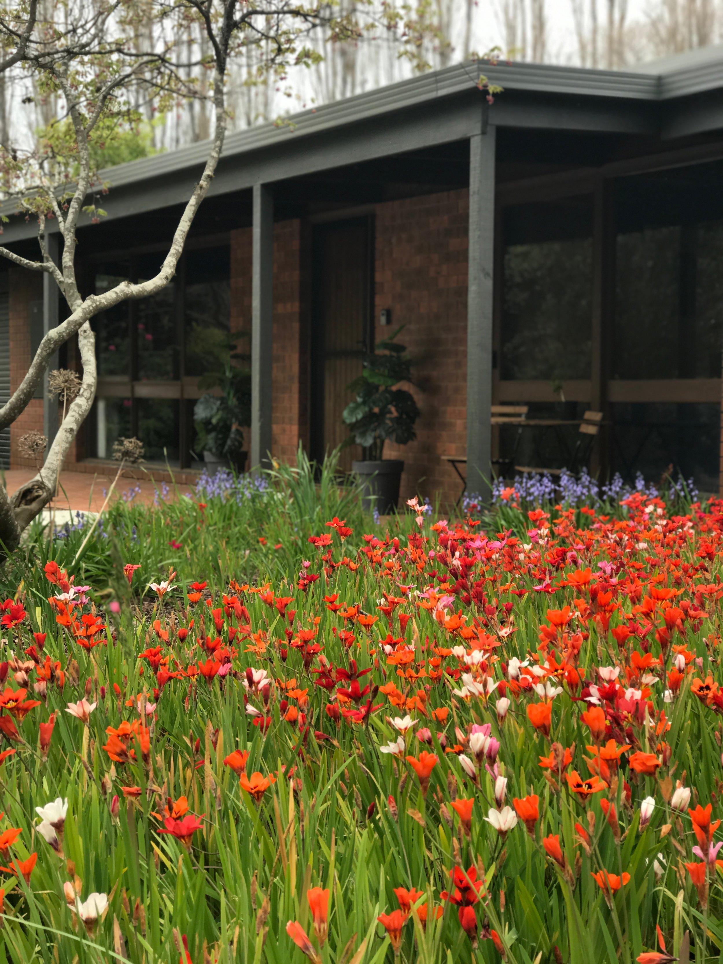 Farrington Flowers.jpg