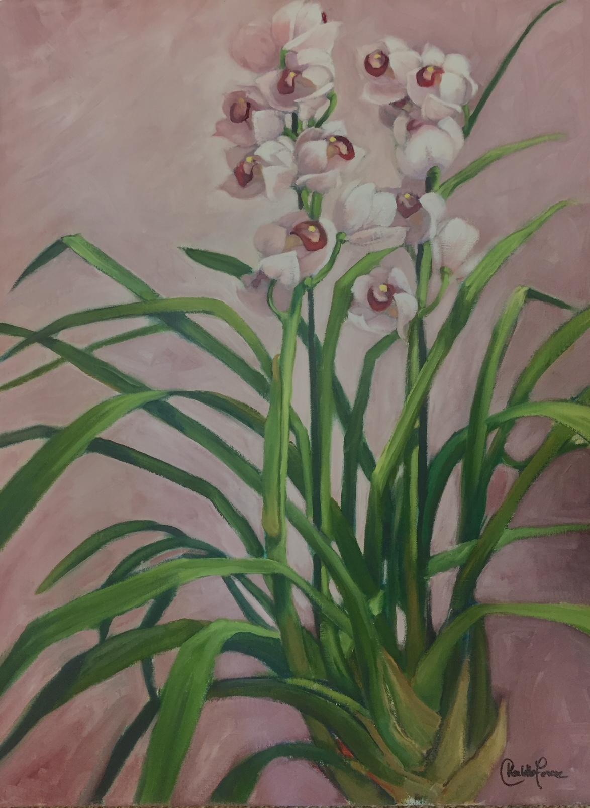Mauve Orchid