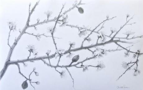 Almond Branch (Spring)