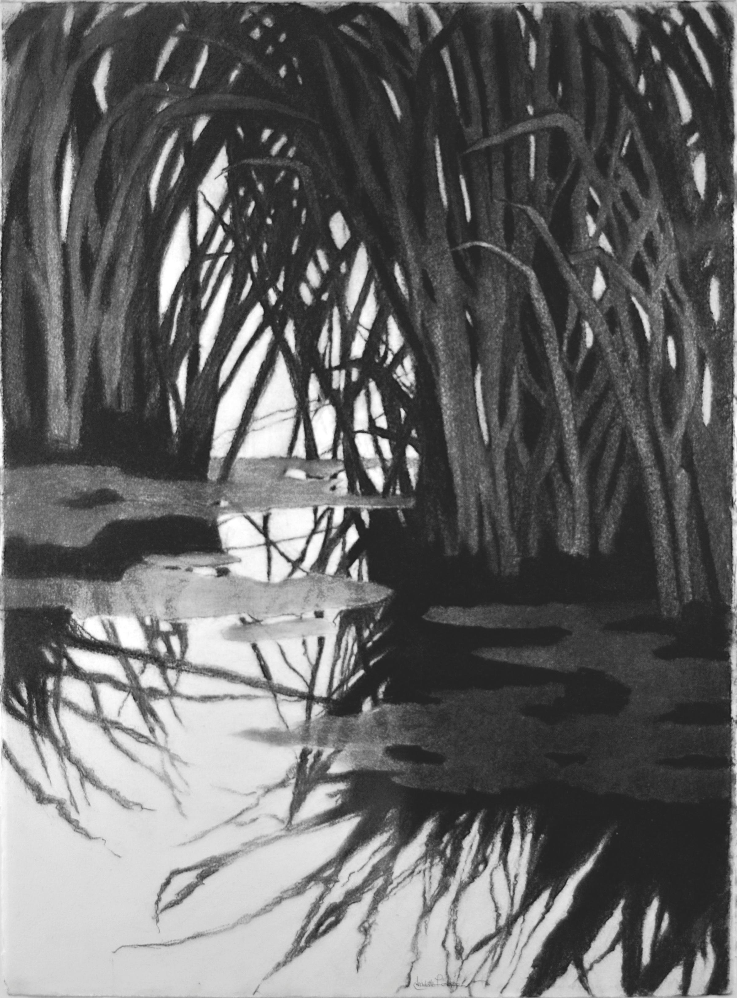 Tinnicum Marsh