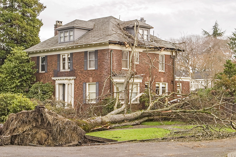 Residential Tree Damage | Professional Loss Adjusters