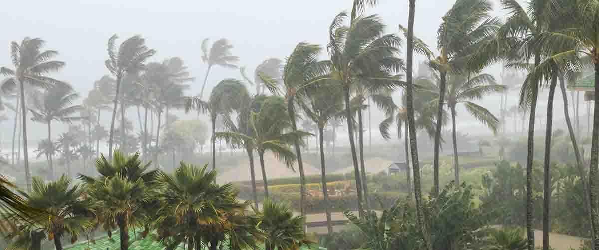 Storm Team | Professional Loss Adjusters