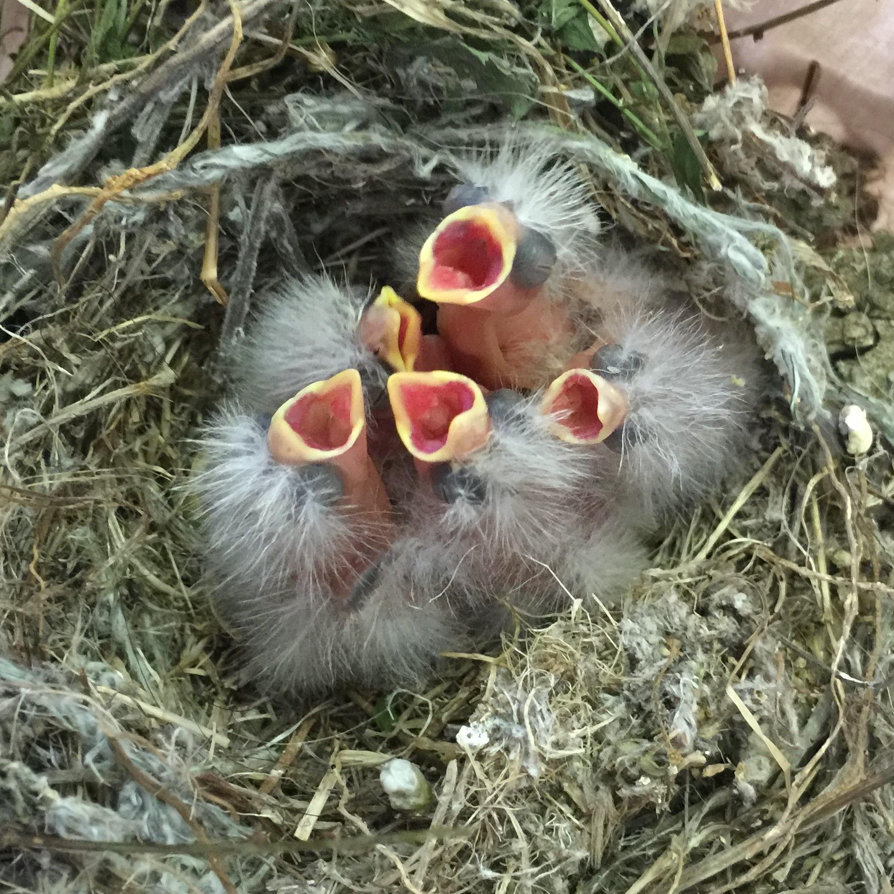 Courtesy Bird Rescue Center