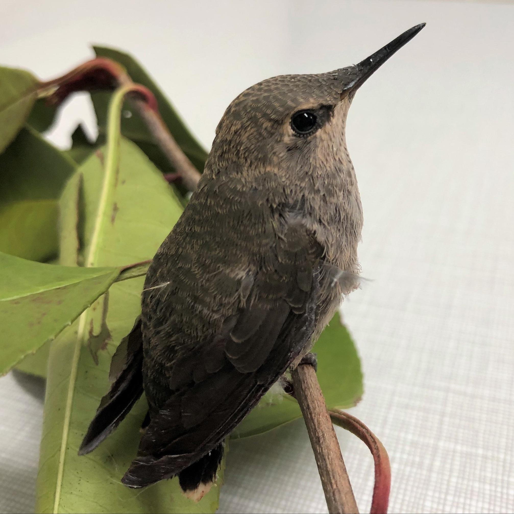 Courtesy of Bird Rescue Center
