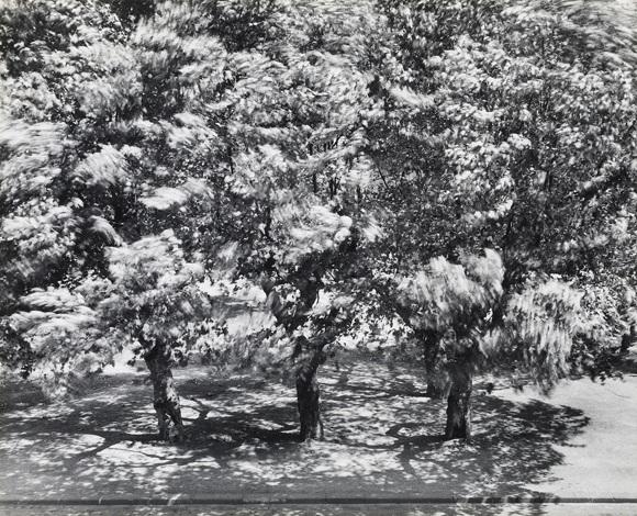 Die Bäume vor meinem Fenster II (The trees outside my window II), 1956